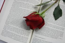 роза-книга