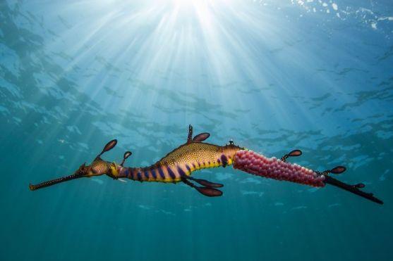 морской дракон.jpg