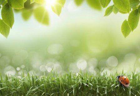 погода-весна-солнце