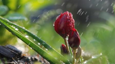 погода-весна-дождь