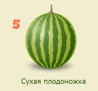 arbuz5.jpg