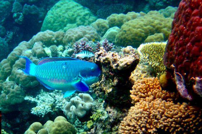 кораллы-австралия.jpg