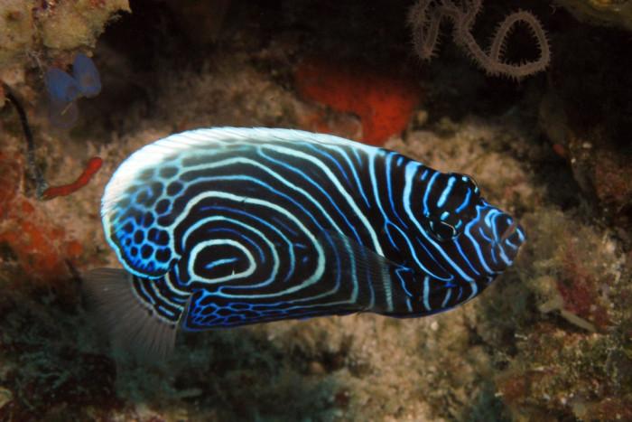 кораллы-вокатобия.jpg