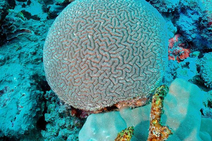 кораллы-индийский океан.jpg