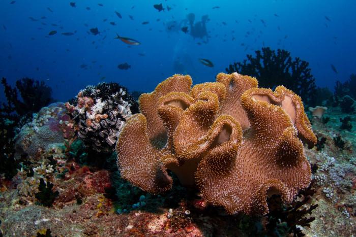 кораллы-мальдивы.jpg