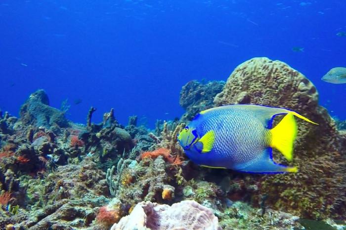 кораллы-мексика.jpg