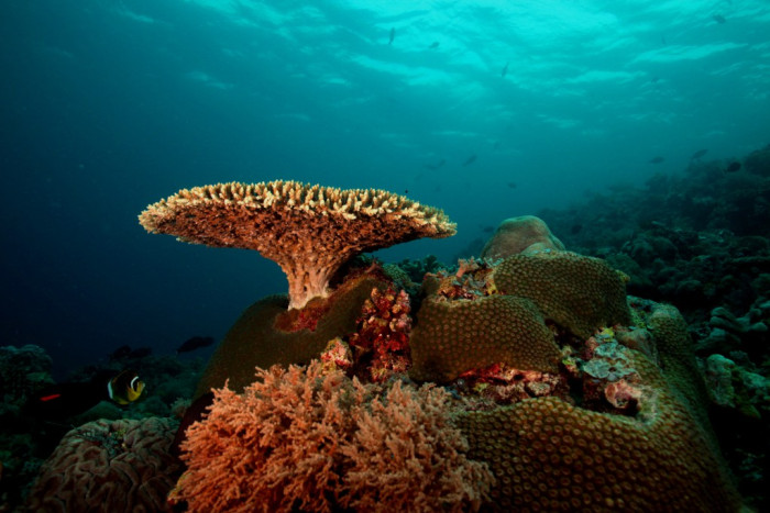 кораллы-туббатаха.jpg