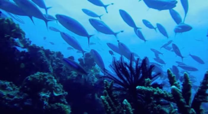 кораллы-фиджи.jpg
