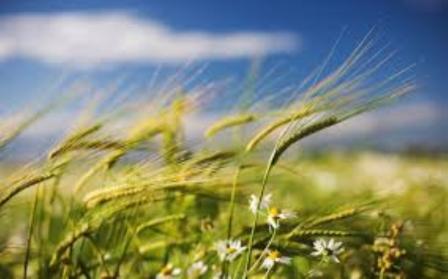 лето-ветер