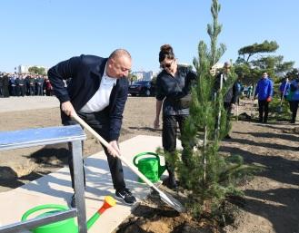 президент-дерево