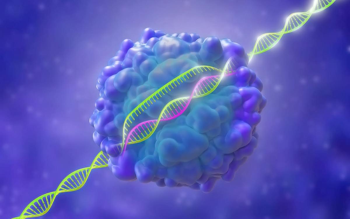 геном.jpg