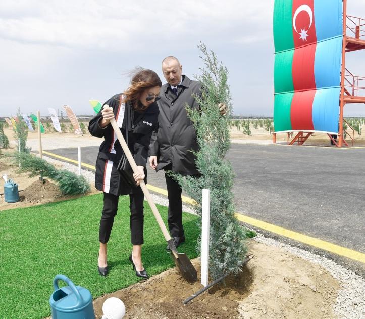 президент-леди-дерево2