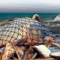 Nazirlik sintetik torlarla balıq ovlayanlara xəbərdarlıq edib
